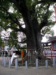 051212sumiyosi2
